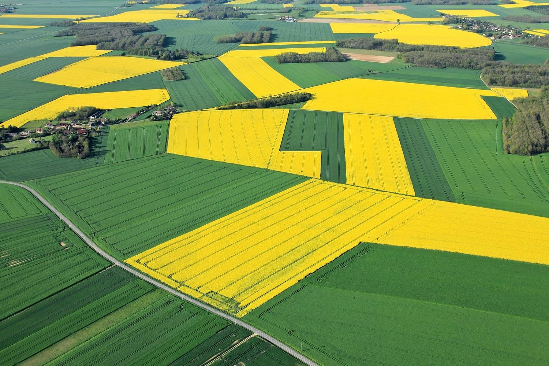 CropRadar: Winter oilseed rape for harvest 2021 – Germany in the lead